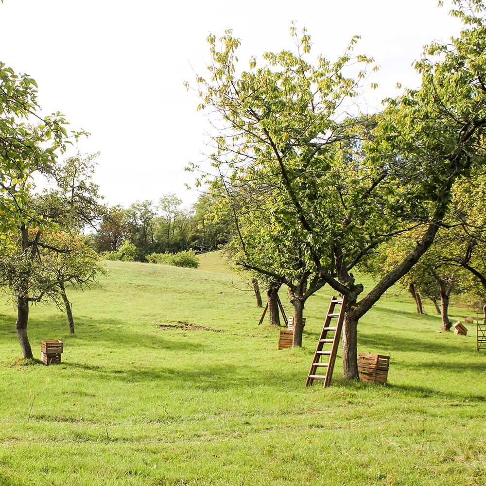Weinberge in Buckow (Märkische Schweiz)