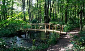Brücke über den Stobber im Naturpark (Märkische Schweiz)