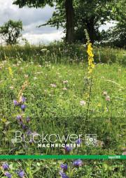 Buckower Nachrichten August 2020